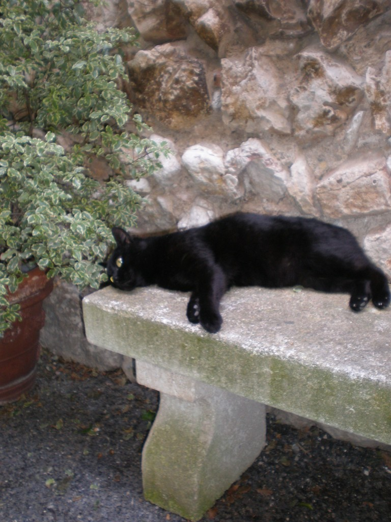 French cat, St.Paul-de-Vence, 2011