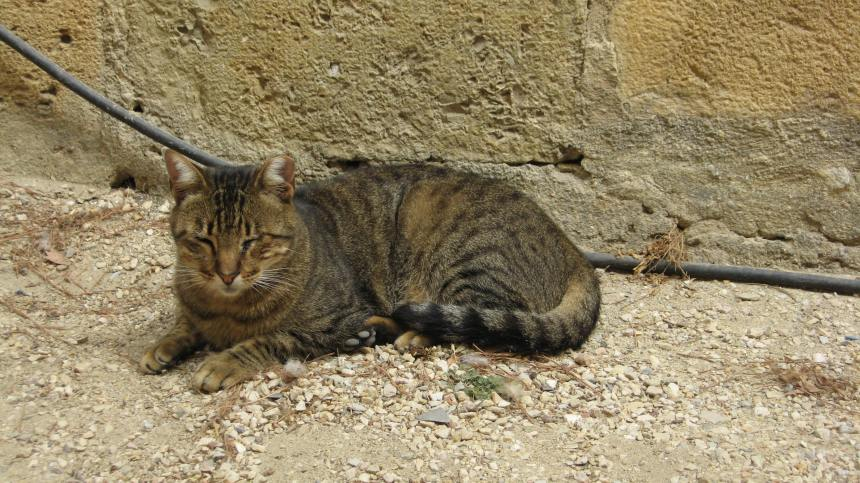 Portuguese cat, Lisbon, 2014