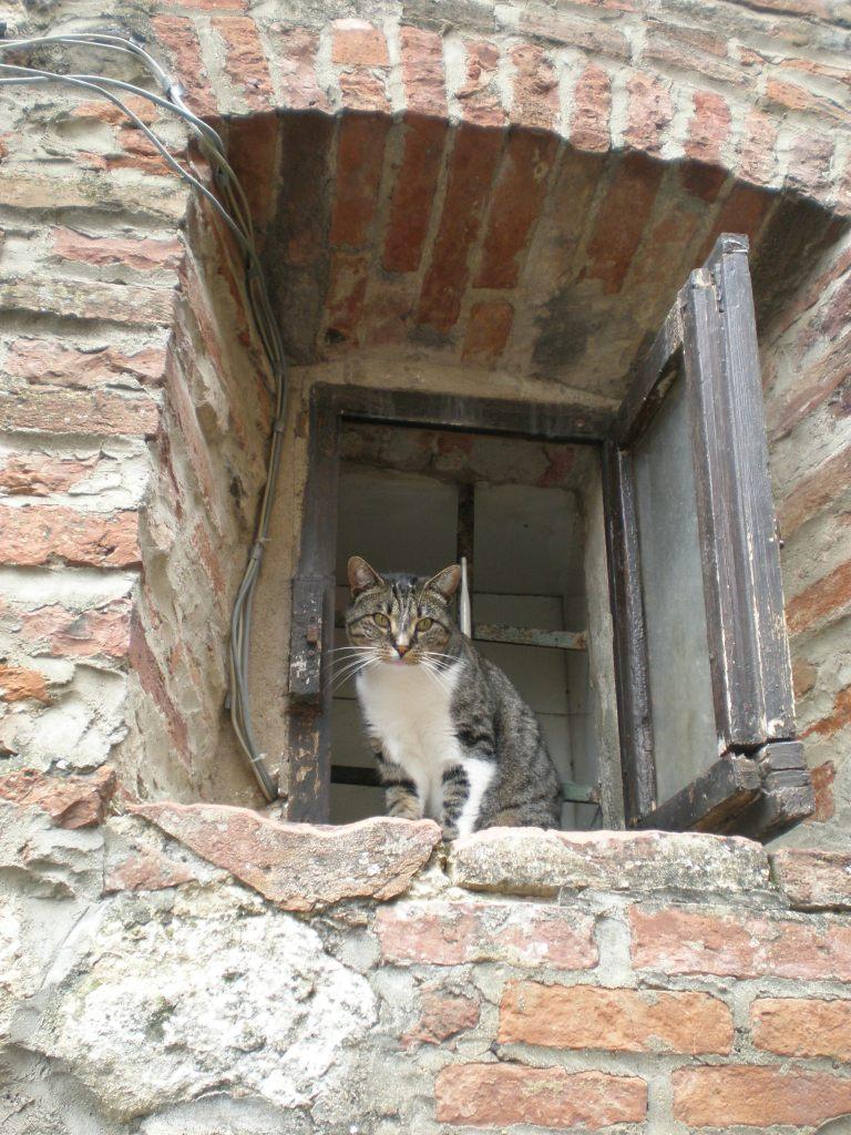 Italian cat, Tuscany, 2013