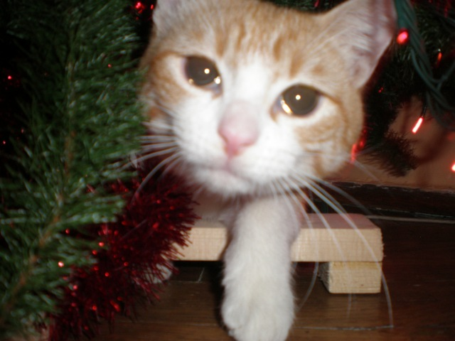 under a Christmas tree