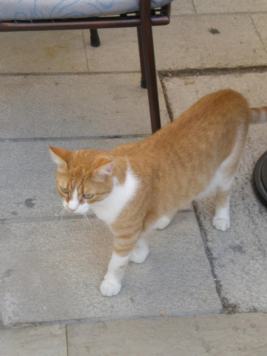 Rab cat
