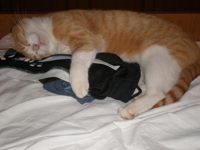 my cat Munchkin :)
