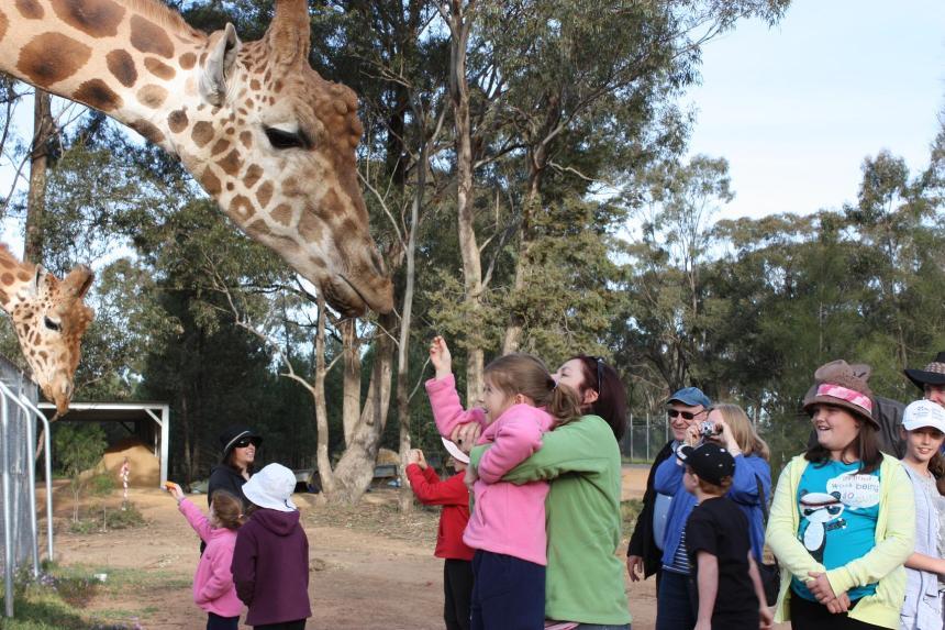 Giraffa_camelopardalis_-Taronga_Western_Plains_Zoo,_near_Dubbo,_New_South_Wales,_Australia-8a_(2)